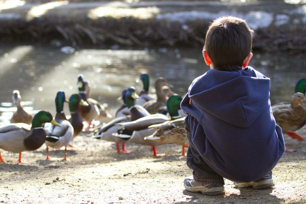 stock-photo-cute-young-boy-feeding-the-ducks-late-in-the-afternoon-48188548-1920x1280.jpg